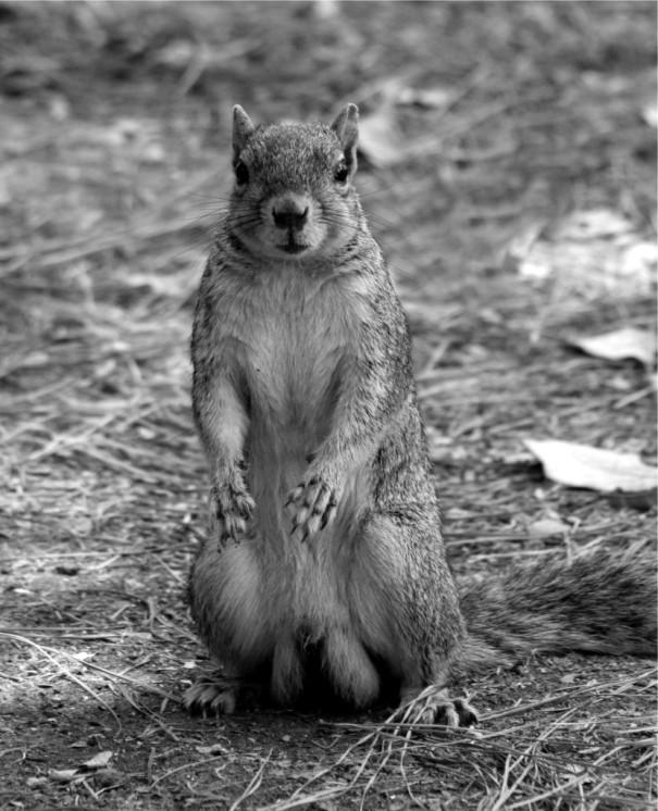 cbwpc-animals-11.jpg