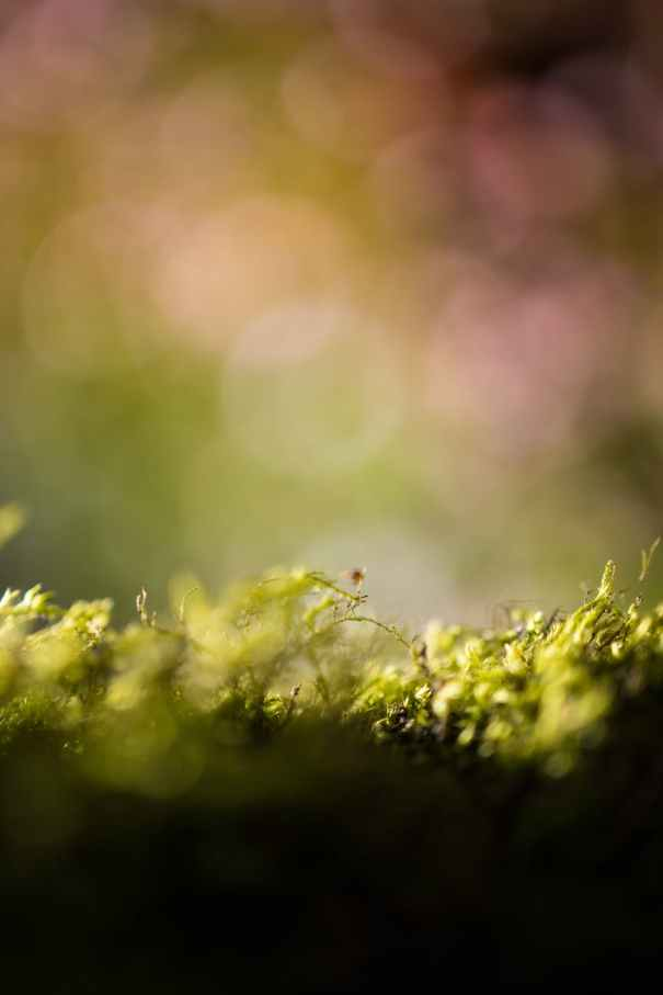 blur photography of plants